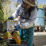 FB-2 16 年川の下蜂場 桜蜜を漉し器に注ぐ .jpg