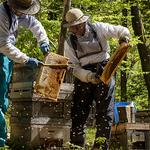 FB-3 22 早霧湖蜂場で蜜巣板を取り出す .jpg