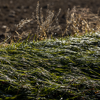 FB 25 来目木の土手の霜が溶ける .jpg