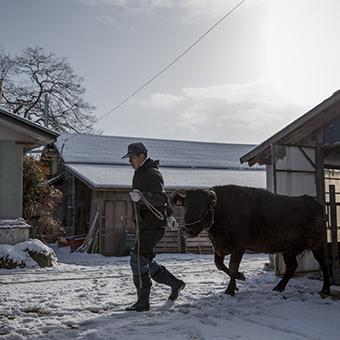 FB 69 千葉文一さん 牛の世話をする .jpg