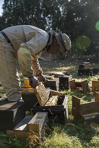 Web 6 蜂の状況を把握する 巣箱の入れ替え .jpg